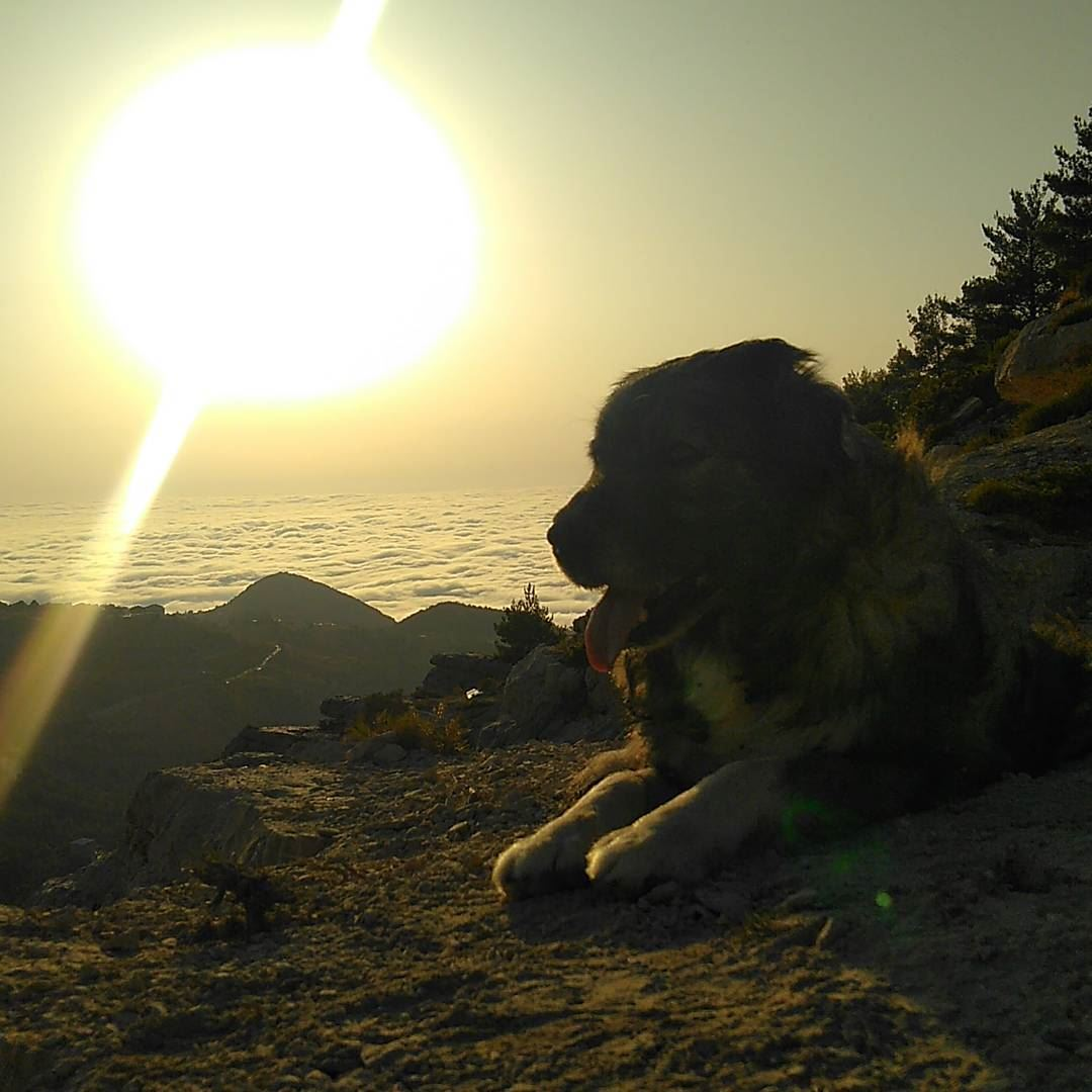 Ehden madeinehden liveloveehden dog bogger mikesportlb sunset ... (Ehden Adventures)