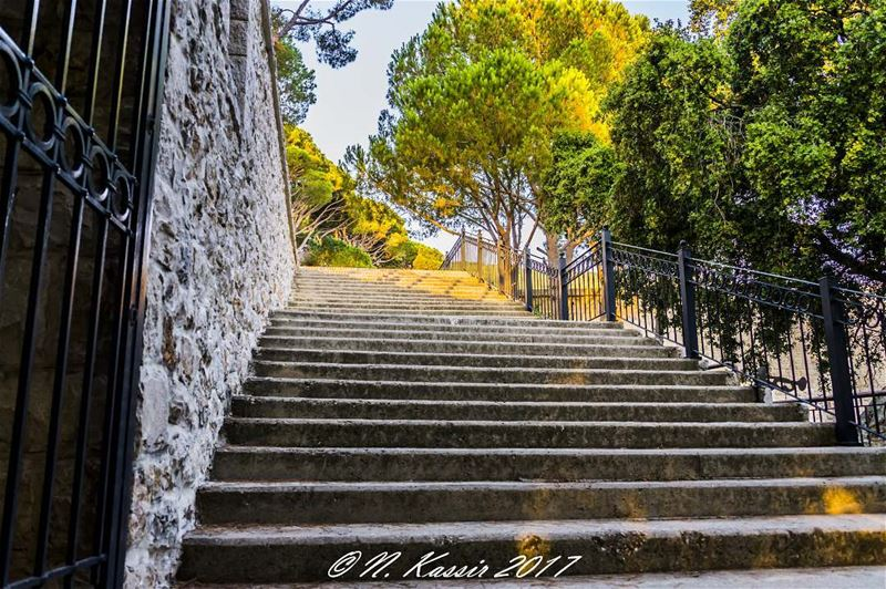 trees stairs mountain ngconassignment Lebanon north exclusive_trees... (St Rafqa-Jrebta)