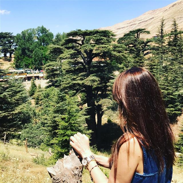 If you get tired, Learn to rest,Not to Quit!  goodday  positivethinking ... (Cedars of God)