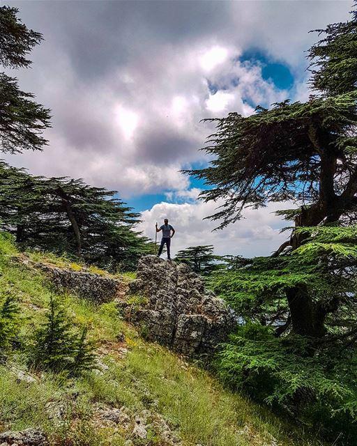مِثل الهوا اللّي مبلّش عَالخفيف hike cedars forest cloud trees ...
