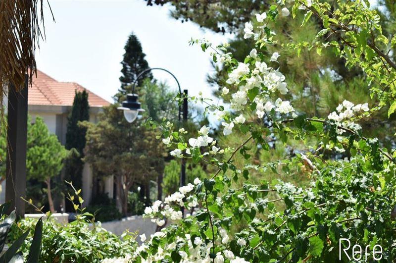 قوية قالوا، متمردة قالوا، طموحة قالوا،واضحة قالوا، و لكنني اضعف احياناً (El Mechref, Mont-Liban, Lebanon)