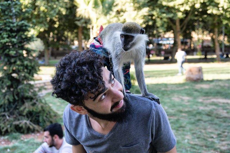 Hello Monkey!! 🐒 🐒 🐒... random funny wildlife lebanon park ...