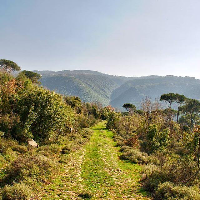 Take the path less traveled by (Mshikha, Mont-Liban, Lebanon)