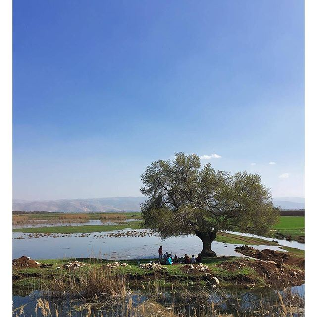 Someone is sitting in the shade today because someone planted a tree a long time ago. By @buddcorp @livelovebekaa (Bekaa valley)
