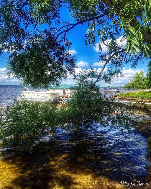 If you truly love nature, you will find beauty everywhere!....... (Houghton Lake, Michigan)