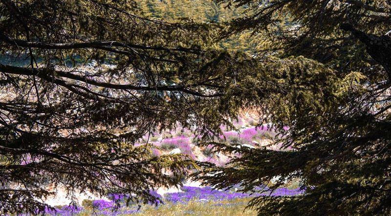 Trees holding hands 🌲🌲 unityispower takemyhand holdmyhand art arts ...