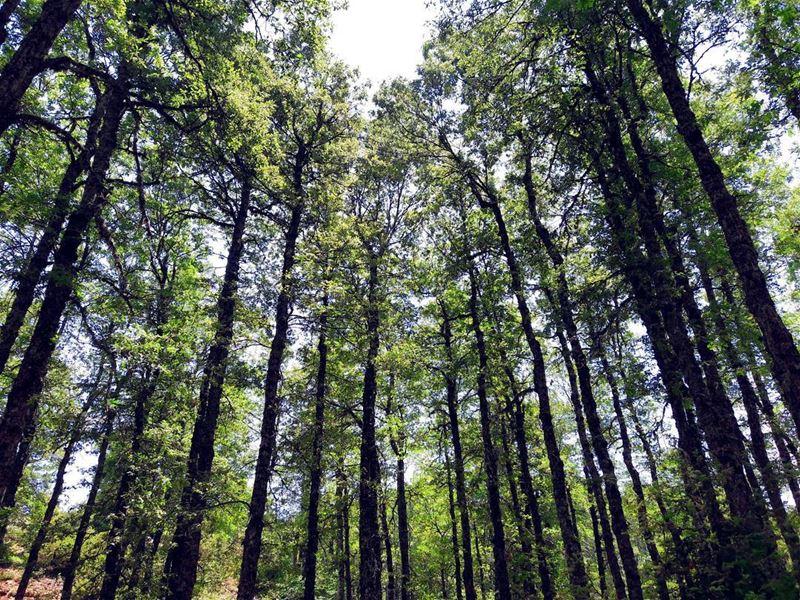 Nature barcode 🌲..... adventure explore liveoutdoors... (غابة العزر-القموعة)