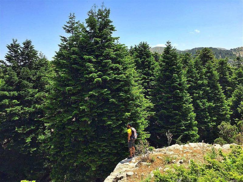 Our Cedars . . . Our Pride... hiking hikingadventures hikingfun ...