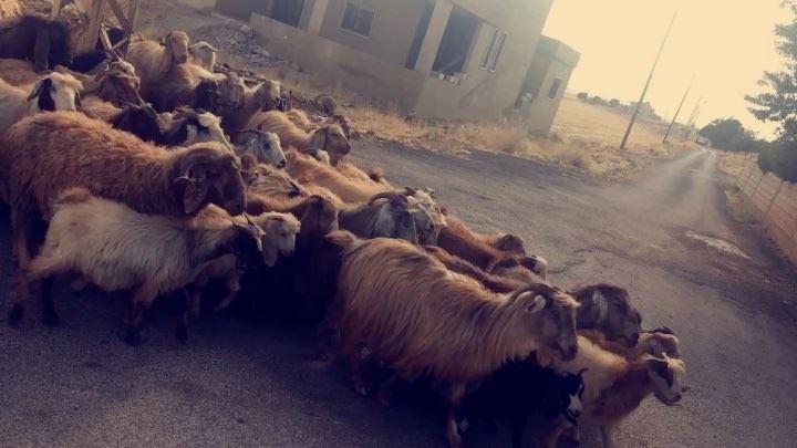 Bara i libanon 😂 lebanese_in_sweden livelovelebanon livelovebeirut ... (Baalbek, Lebanon)