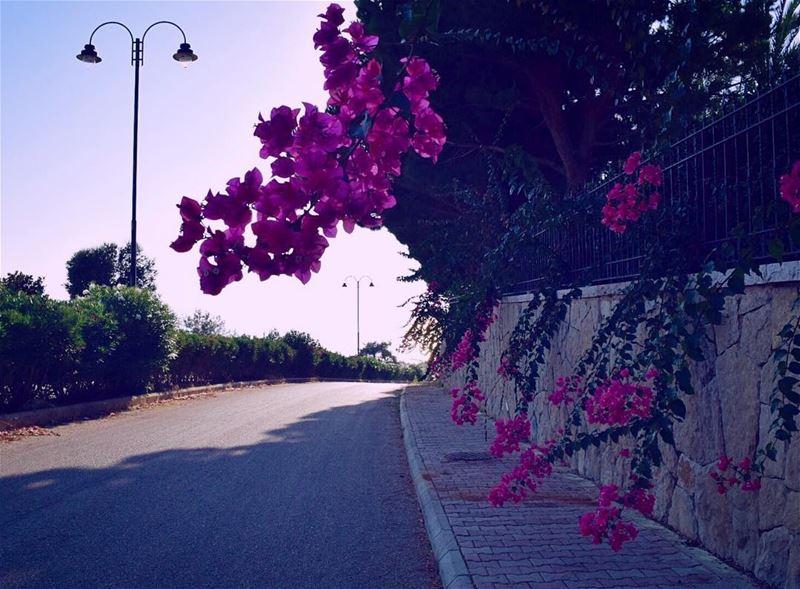 livelovelebanon ptk_lebanon ig_lebanon lebanoninapicture ... (Mechref)
