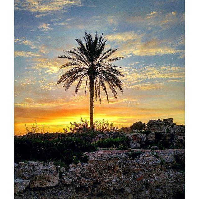 A little bit of paradise by @ashraf_nas @livelovetyre (Tyre, Lebanon)