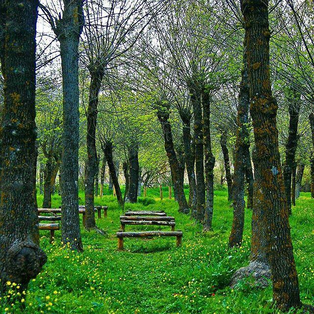 Green getaway by @tonyosta @livelovezahleh @livelovebekaa (Taanayel- Bekaa)