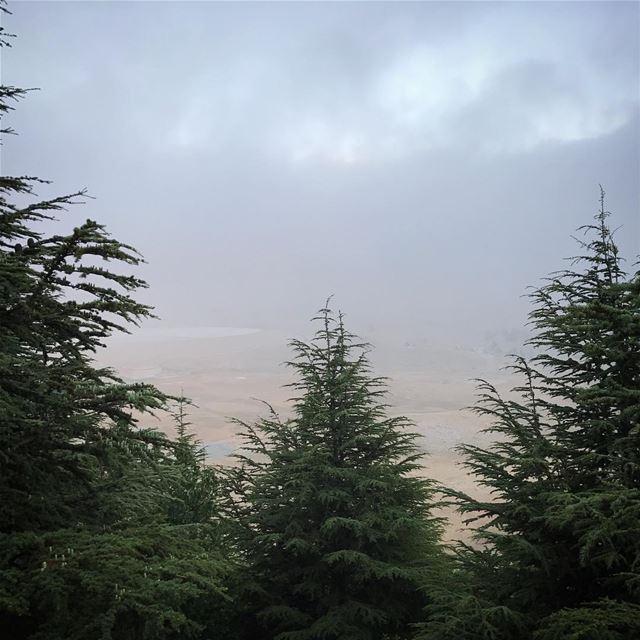 ~..Wonderlust..~ 🌲🍂 thewayyousee thewayyouread thewayyoufeel ... (Falougha, Mont-Liban, Lebanon)