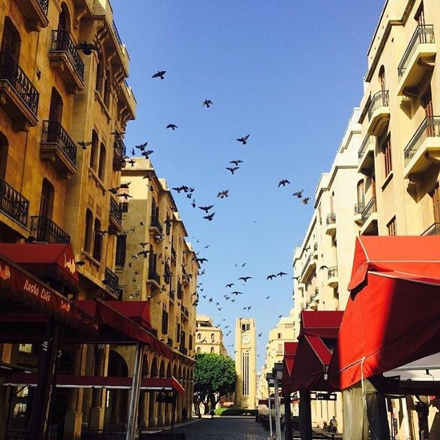 Count the birds!! Photo by @waelmokhayber (DownTown, Beirut)