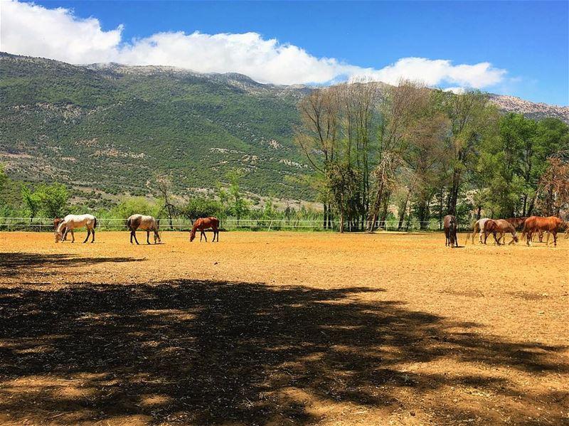 lebanon bekaa throwback instagood wanderlust travelgram ... (Valle de la Becá)