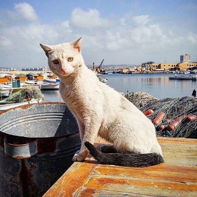 Fishercat @livelove.pets @livelovetyre by @ashraf_nas (Tyre, Lebanon)