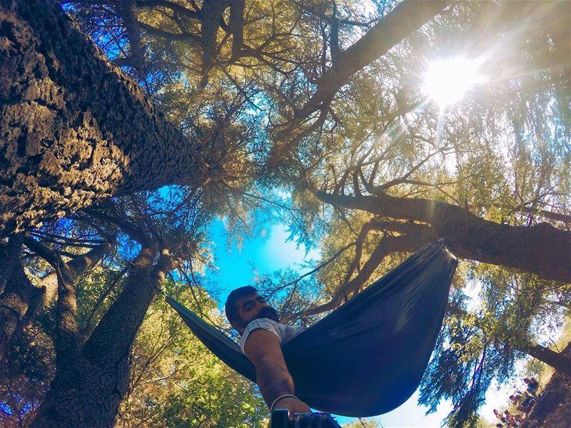 Good Ham-Morning 🌞 morning sun sky blue trees tree cedars hammock... (Arz Tannoûrîne)