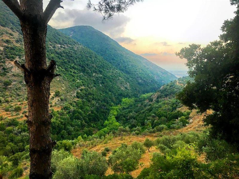 s o u t h e r n .. l o v e ❤️ lebanon lebanon_hdr jarjouh arabsalim ... (Jarjou`, Al Janub, Lebanon)
