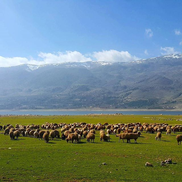 Enjoy your week end! If not you can still count the sheep By @ksokhn @livelovebekaa (Karaoun Lake)