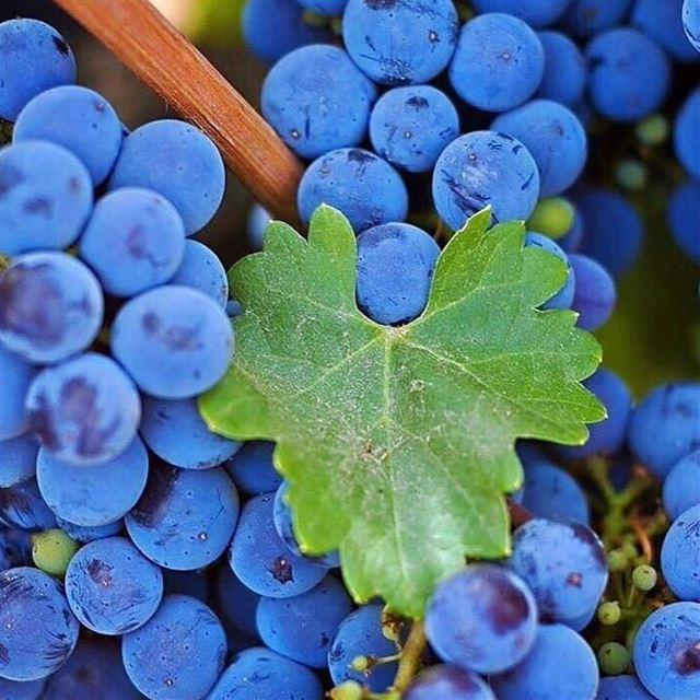 delicious lebanese_nature fruits summertime purple love_natura ...