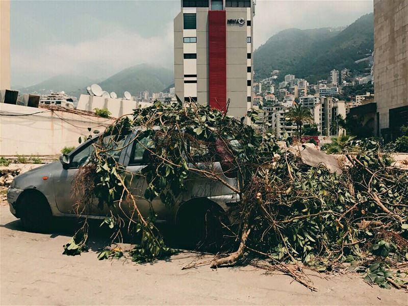 Nature making a... (Beirut, Lebanon)