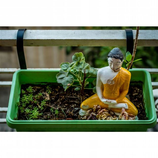 buddha statue plant green balcony home pray soil pot plantpower ...
