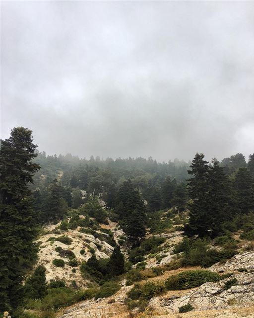 Gloomy morning ☁️ morning view @liveloveakkar peterwenmaken ⚡️ (`Akkar, Liban-Nord, Lebanon)