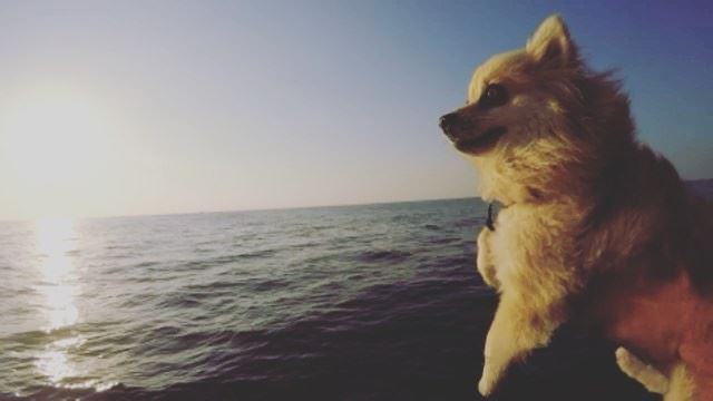 Stinky loves Titanic movie 🛳 🐶❤️ lebanon lebanon_hdr chekka sea ... (The Titanic)