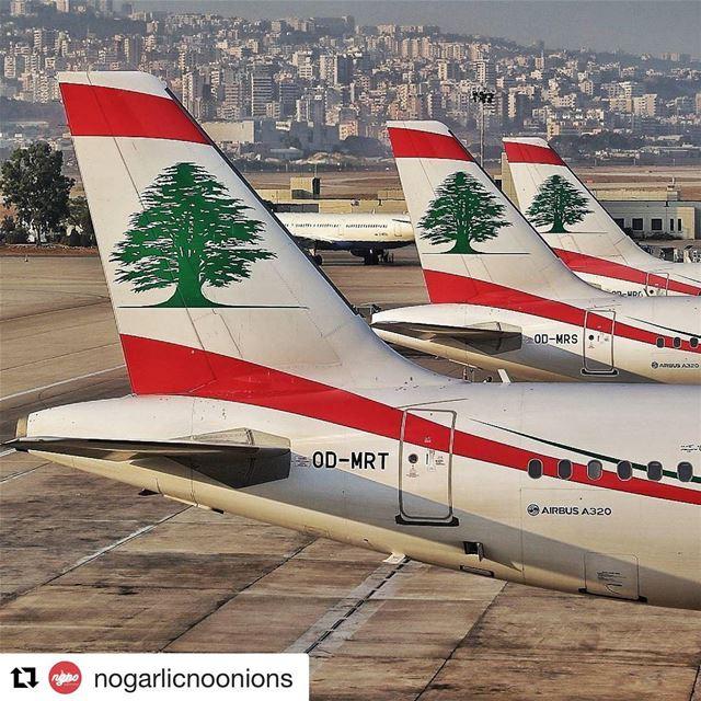 🇱🇧 Bandeira libanesa nos aviões da companhia aérea nacional. Orgulho! ... (Beirut–Rafic Hariri International Airport)