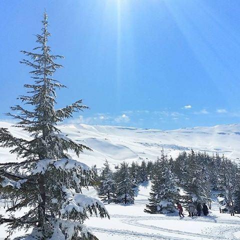Clearest sky @livelovecedars by @eliesamarani (Cedars Of Lebanon)