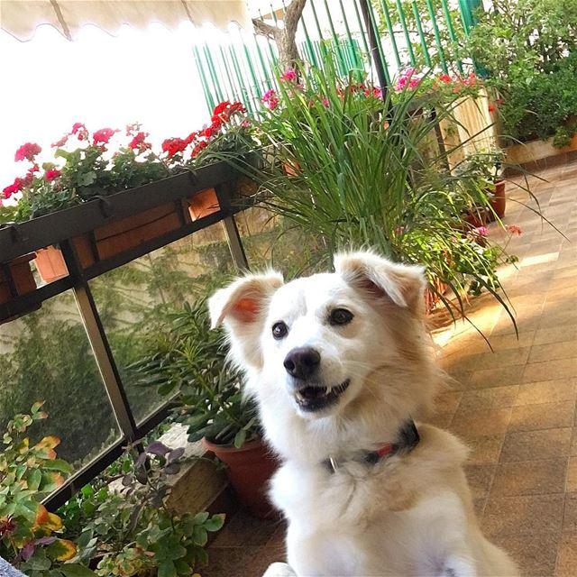 Hellooooo 🐶-- goodmorning dog puppies adopted instamood instadaily... (Beirut, Lebanon)