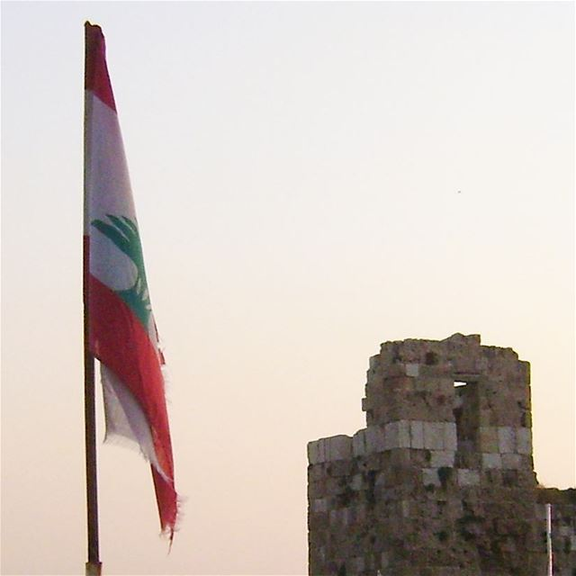 Cedrus Libani 🌲❤🌲 LiveLoveCedars CedarsOfGod CedrusLibani 🌲🌲🌲🌲🌲🌲