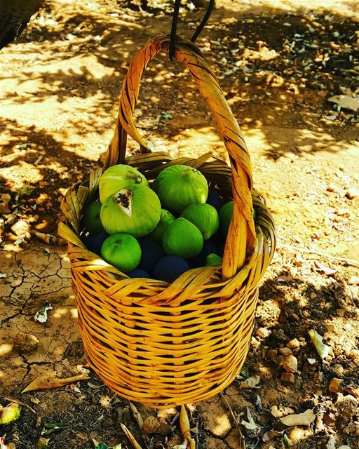 basket of fig fruit ig_lebanon igers bestnatureshots bestoftheday ...