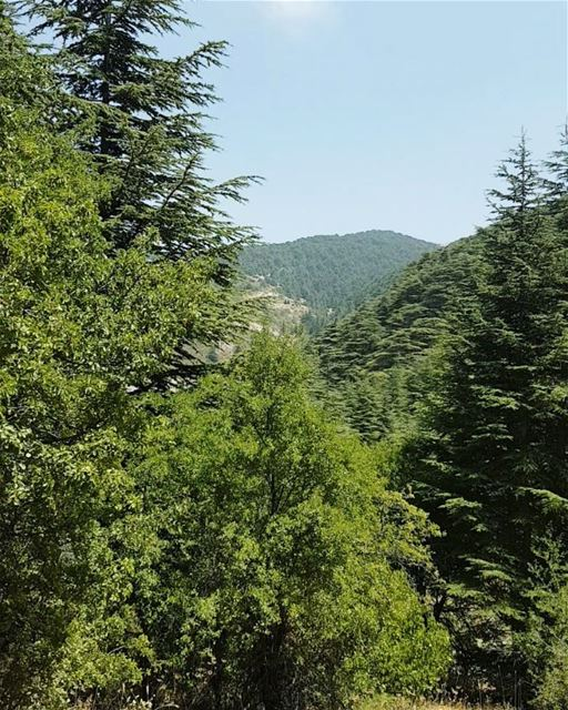 Look deep into nature, and then you will understand everything better.... (Al Shouf Cedar Nature Reserve)