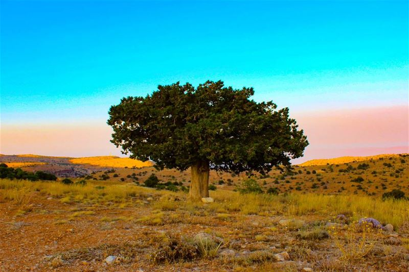 Lazzab in sunset ❤️ tree_magic hermel lazzab lazzabecolodge ...
