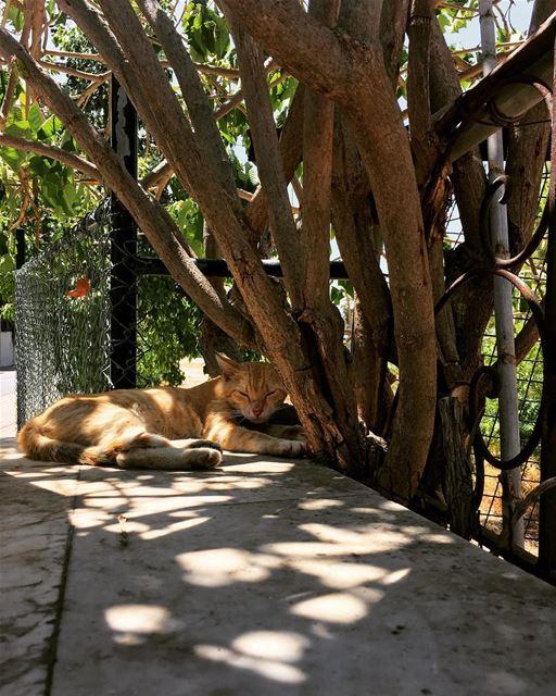 photooftheday picoftheday streetphotography insta_lebanon noonnaps ... (Bramiyé, Liban-Sud, Lebanon)