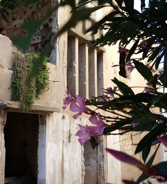 Years after the war .. antient home house after war green tree ... (Al Khiyam, Al Janub, Lebanon)