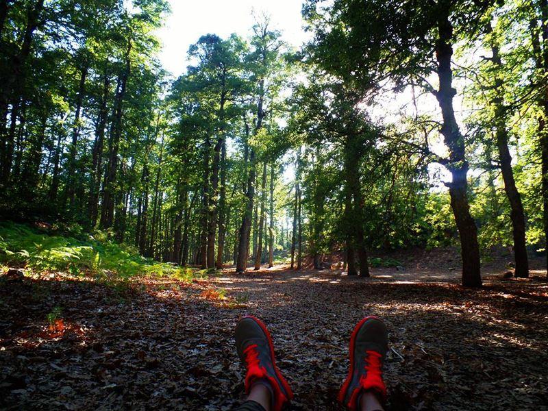 غابةالعزر القموعة ammou3a fnaidek forest trees hikerland ... (Ammou3a)
