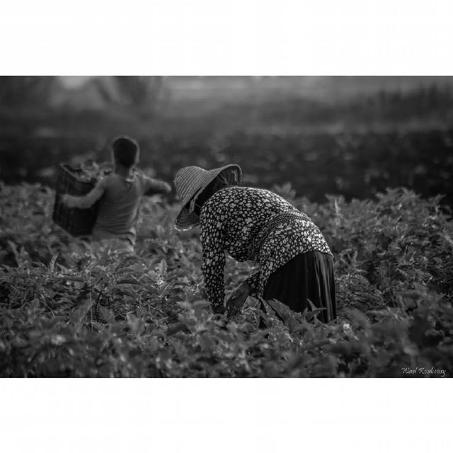 bnw  blackandwhite  farmers  photography  woman  farmer  farming  people ... (Akar, Liban-Nord, Lebanon)