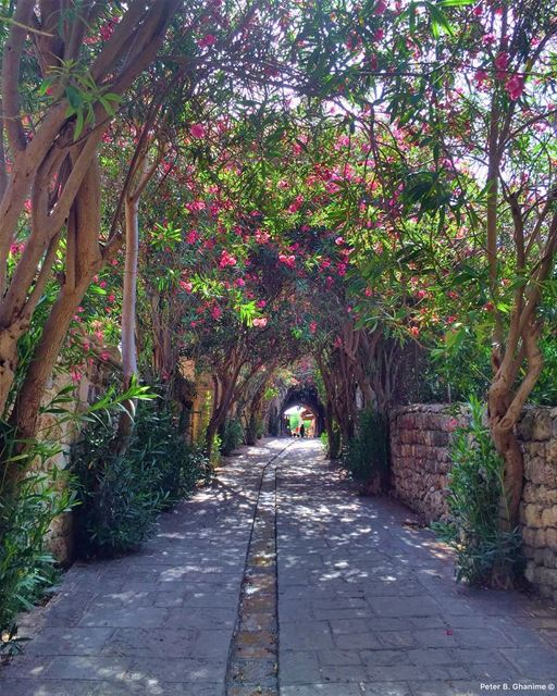 ▪️Rise Up ◾️Start Fresh ◼️See the Bright Opportunity in Each New Day ... (Byblos, Lebanon)