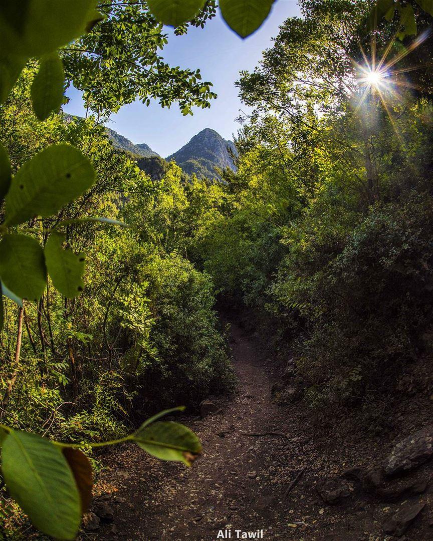 Lets go 💚🌳🌲 nature landscape beautiful chowen naturephotography ...