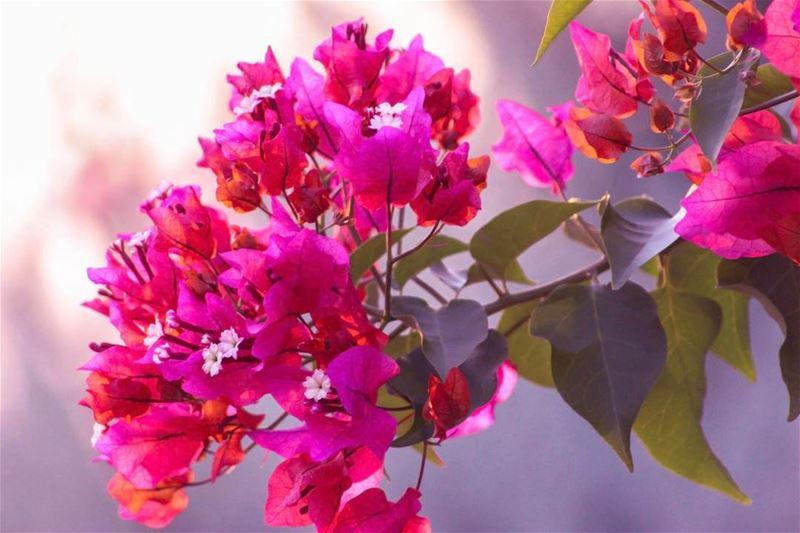 flowers village southern lebanon nature lebanon_hdr lebanon_hdr... (`Aynata, Al Janub, Lebanon)
