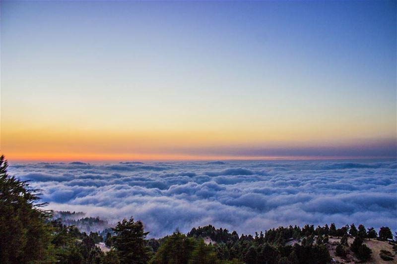 Above the clouds...🌅☁ (El Qammoûaa)