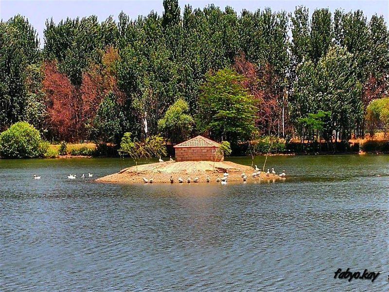 lake nature naturelovers trees forest photooftheday picoftheday... (Deïr Taanâyel, Béqaa, Lebanon)