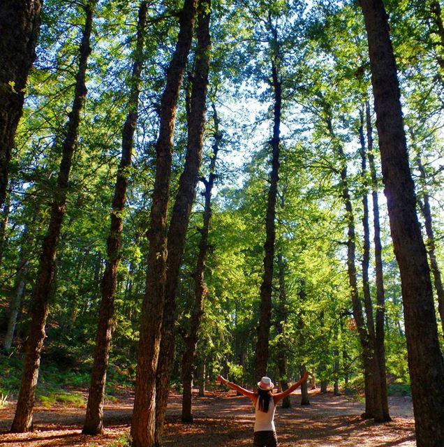 ammou3a fnaydek forest 3ezer trees green liveloveakkar lb_akkar ... (Ammou3a)