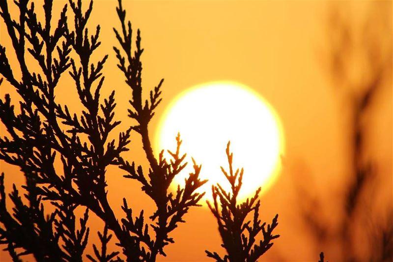 southern village aynatha landscape sunrise sunshine nature lebanon_hdr... (`Aynata, Al Janub, Lebanon)