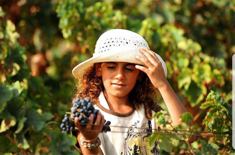 batroun  batrounmountains  grapes  wine  vineyard  winery  bebatrouni ... (Batroun District)