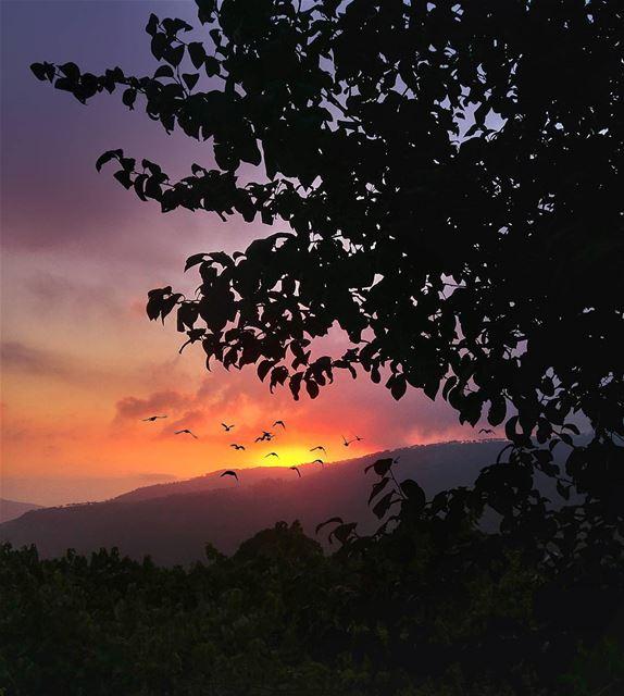 Colorful Sunset 😍 lebanon nature naturelovers natureporn landscape ... (Hammana)
