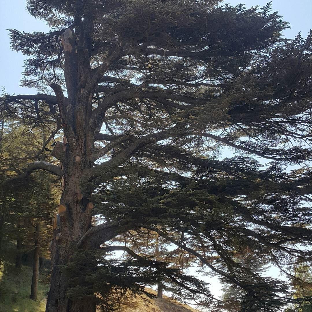Cedars of God...