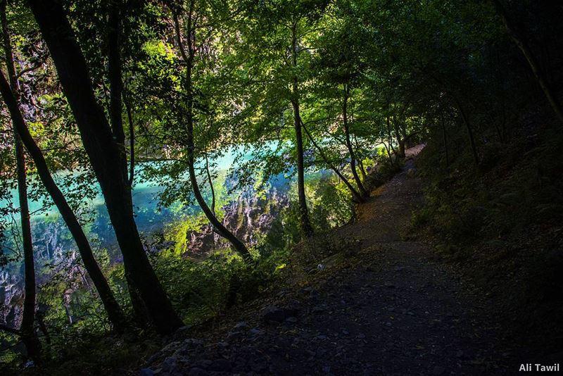 خُذْني إلى ضوء التلاشي كي أَرىصَيْرُورتي في صُورَتي الأُخرى .. درويش 💚... (Chouène, Mont-Liban, Lebanon)